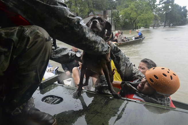 National Guardsmen help lift a dog into a truck during rescue efforts in Texas.