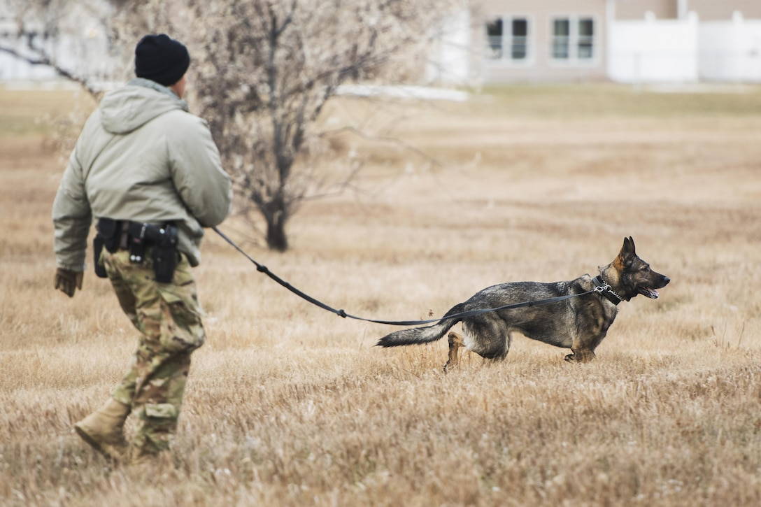 Senior Airman Angel Flores, 5th Security Forces Squadron military working dog handler, and MWD Kety spot a marksman team member during joint-unit training at Minot Air Force Base, N.D., Nov. 22, 2017. MWD teams trained with 719st Missile Security Forces squadron marksman teams to identify and apprehend personnel attempting to evade or avoid detection. (U.S. Air Force photo by Senior Airman J.T. Armstrong)