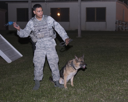 KitKat, 18th Security Forces Squadron military working dog, waits for his toy to be thrown by U.S. Air Force Staff Sgt. David Maestas, 18th SFS military working dog handler, during obedience training Dec. 12, 2017, at Kadena Air Base, Japan.