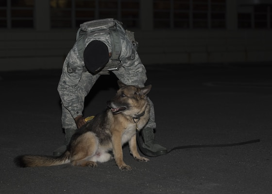 KitKat, 18th Security Forces Squadron military working dog, is brushed by U.S. Air Force Staff Sgt. David Maestas, 18th SFS military working dog handler, during grooming Dec. 12, 2017, at Kadena Air Base, Japan.