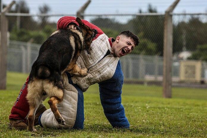 Devil Dog Training