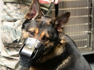 A 9th Security Forces military working dog sits in the veterinary clinic