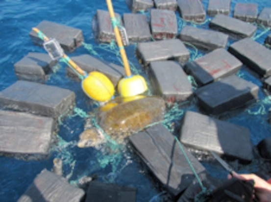 Image of sea turtle tangled in floating bales of cocaine