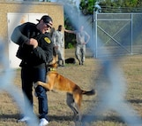 A member of the Tampa Bay Rays baseball organization is apprehended by a military working dog during a tour at MacDill Air Force Base, Fla., Jan. 18, 2017. Additionally, Dog handlers from the 6th Security Forces Squadron demonstrated some of the techniques they use to train their canines, as well as some of the scenarios they can potentially encounter and how each would be handled for members of the Rays organization. (U.S. Air Force photo by Airman 1st Class Heather Fejerang)
