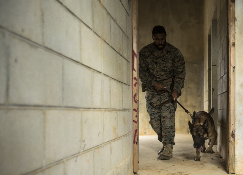 Cpl. Lawrence O. Johnson II clears a building of explosive ordnance during a training exercise in Okinawa, Japan, Jan. 25, 2017. Military working dogs are trained to detect airborne and ground scents indicating the presence of explosive ordnance. The dogs can be utilized to detect explosives in vehicles, open areas, enclosed spaces, cargo and buried underground. Johnson from Williamstown, New Jersey, is a patrol explosive detection dog handler with 3rd Law Enforcement Battalion, III Marine Expeditionary Force Headquarters Group, III Marine Expeditionary Force. (U.S. Marine Corps photo by Cpl. Jessica Etheridge)