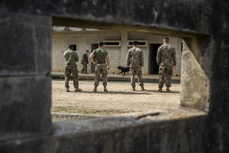 Marines observe the abilities of military working dog teams during a training exercise in Okinawa, Japan, Jan. 25, 2017. The Marines are dog handlers with 3rd Law Enforcement Battalion, III Marine Expeditionary Force Headquarters Group, III Marine Expeditionary Force. (U.S. Marine Corps photo by Cpl. Jessica Etheridge)