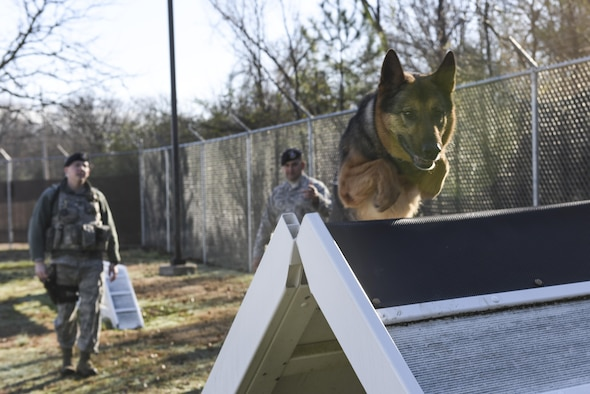 Military working dog Kato leaps on top of an obstacle during a K-9 validation Jan. 24, 2017, at Little Rock Air Force Base, Ark. Dog handlers and military working dogs are required to go through validations annually to evaluate the dog's obedience and health. (U.S. Air Force photo by Senior Airman Mercedes Taylor)