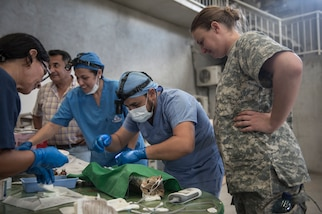 PUERTO BARRIOS, Guatemala (Feb. 3, 2017) -- Army Capt. Amanda Jeffries of Raleigh, N.C., assigned to Public Health Activity-Fort Belvoir, Dover Branch Veterinary Service, Va., observes a sterilization procedure performed by local veterinarians on pets belonging to host nationals at the Continuing Promise (CP-17) veterinarian site in Puerto Barrios, Guatemala. CP-17 is a U.S. Southern Command-sponsored and U.S. Naval Forces Southern Command/U.S. 4th Fleet-conducted deployment to conduct civil-military operations including humanitarian assistance, training engagements, medical, dental, and veterinary support in an effort to show U.S. support and commitment to Central and South America. (U.S. Navy Combat Camera photo by Mass Communication Specialist 2nd Class Ridge Leoni)
