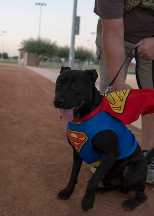 "Service members, their families and pets enjoyed prizes and treats during the ""Purple Paws for a Cause"" event hosted by the Marine Corps Community Services Family Advocacy Program at Marine Corps Air Station Yuma, Ariz., Friday, October 21, 2016"