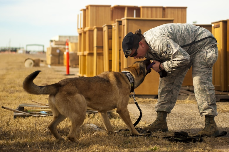 U.S. Air Force Airman 1st Class Hailey Slenk, 17th Security Forces Squadron K9 handler, plays with Eros, 17th Security Forces Squadron military working dog, during a training exercise on Goodfellow Air Force Base, Texas, Feb. 8, 2017. The exercise was to demonstrate to students the way military working dogs are utilized and how their training is applied. (U.S. Air Force photo by Senior Airman Scott Jackson/Released)