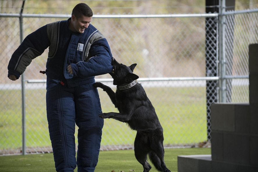 Buster, 23d Security Forces Squadron military working dog, latches onto the arm of 2nd Lt. Ryan Noblin, 75th Aircraft Maintenance Unit officer in charge, during an Emerge Moody course, Feb. 2, 2017, at Moody Air Force Base, Ga. Buster was trained as part of the Department of Defense MWD program, which is the world's largest training center for military dogs and handlers located at Joint Base San Antonio-Lackland, Texas. (U.S. Air Force photo by Airman 1st Class Daniel Snider)