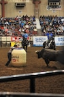A bull gives the audience some additional entertainment during the 85th Annual San Angelo Stock Show and Rodeo Military Appreciation Night at the Foster Communications Coliseum in San Angelo, Texas, Feb. 15, 2017. Holding up the hat from inside the barrel is rodeo clown Justin Rumford. (U.S. Air Force photo by Staff Sgt. Laura R. McFarlane/Released)