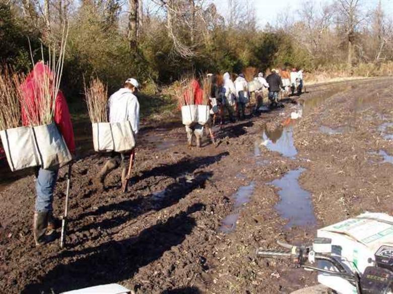 Planting of vegetation for restoration