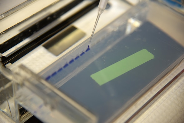 A small sample of DNA is added to a product gel to see if the amplification process worked Aug. 24, 2016, at the Armed Forces Medical Examiner System on Dover Air Force Base, Delaware. The product gel is run through an electrical current for 15 minutes to separate the DNA by size. (U.S. Air Force photo/Senior Airman Ashlin Federick)