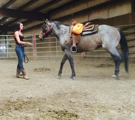 Air Force Office of Special Investigations Special Agent Katherine Licht encourages her horse, Storm, to come to her as part of foundation training to build mutual trust and acceptance of leadership roles. (Courtesy photo/SA Katherine Licht)