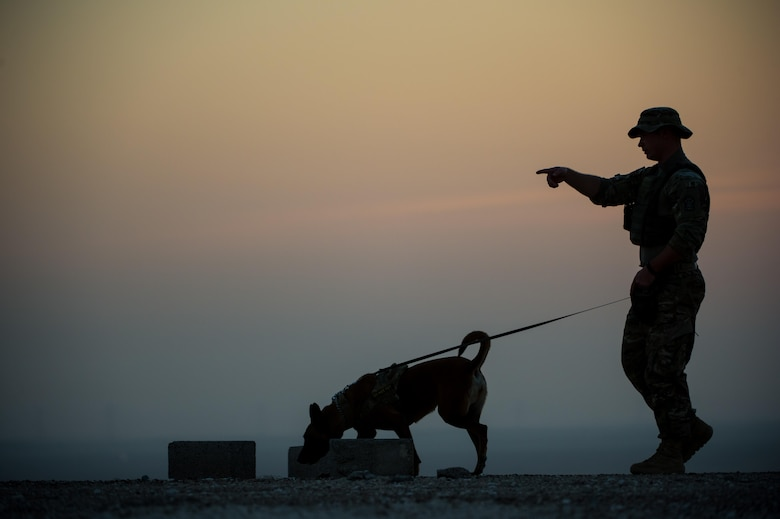 A 380th Expeditionary Security Forces Squadron military working dog team completes a detection training scenario at an undisclosed location in Southwest Asia, Jan. 10, 2017. Military working dogs complete weekly training scenarios to maintain the standards needed to protect military installations. (U.S. Air Force photo/Senior Airman Tyler Woodward)