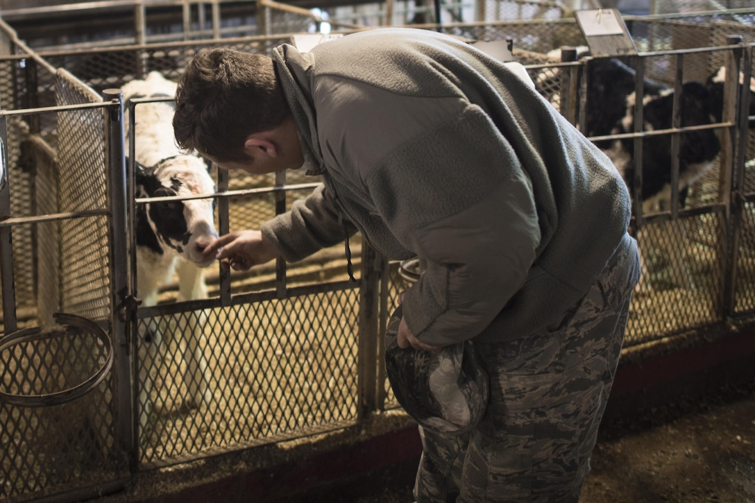 An Air Commando meets a calf at a local dairy as part of the Clovis Newcomers Community Tour Jan. 18, 2017 in Clovis, N.M. The tour, hosted by the Clovis/Curry County Chamber of Commerce and the Committee of 50 military affairs committee, introduces new Air Commandos to industries, history and entertainment options in Clovis. (U.S. Air Force Photo by Senior Airman Shelby Kay-Fantozzi/ released)