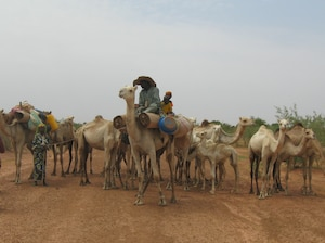 A family who depends on a nomadic lifestyle moves with their animals in search of water or pasturage in central Niger. Environmental change and insecurity pose increasing threats to nomadic peoples across the Sahel.