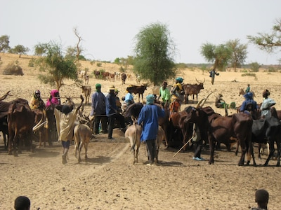 People and their livestock gather at a well in rural Niger. Water is a scarce and precious resource across the Sahel, and access is frequently a point of contention.