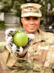 Army Spc. Ikeisha Q. Wills, an Atlanta, Ga., native serving as a human resources specialist, Headquarters & Headquarters Company, 143d Sustainment Command (Expeditionary), holds a green tomato picked from the Colonialtown North Community Garden Jan. 27, 2017, in Orlando, Fla. Wills and six other Army Reserve Soldiers joined scores of volunteers to bring one of the city's oldest community garens back to its former, greener glory. Directed by Green Works Orlando in conjunction with the NFL's Environmental Program, the garden's revival was one of the many community projects both organizations managed to lighten the environmental footprint produced by the tens of thousands of football fans who have flocked to The City Beautiful to watch the NFL's first Pro Bowl game to take place in the Continental U.S. since 1979.