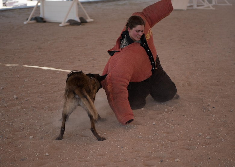 U.S. Air Force Academy Cadet Elizabeth Hartman gets taken to the ground by a military working dog during MWD aggression training at an undisclosed location in Southwest Asia, June 28, 2017. The U.S. Air Force Academy cadets are deployed to the 386th Air Expeditionary Wing as part of the academy's Operation Air Force program, which exposes cadets to a variety of career fields to aid them in their future career selections.  (U.S. Air Force photo by Tech. Sgt. Jonathan Hehnly)
