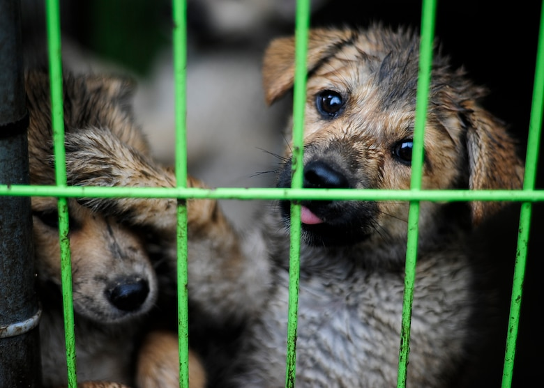 Two puppies play behind a fence at an animal shelter in Daegu, Republic of Korea, July 8, 2017. U.S. Air Force Airmen took a trip, sponsored by Kunsan Patriots for Animal Welfare and Scholarships, to help the shelter with daily duties and donate more than 200 pounds of food and supplies. (U.S. Air Force photo by Staff Sgt. Victoria H. Taylor)
