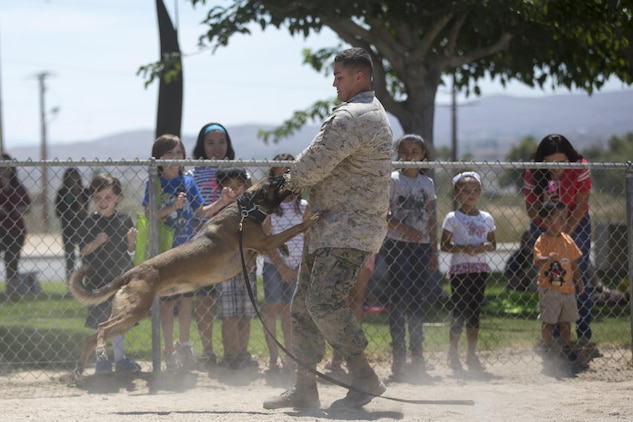 Lance Cpl. Julian Norris, MWD handler, PMO, acts as a simulated perpetrator for Nnariko, MWD, PMO, during a demonstration at the Twentynine Palms Public Library, July 13, 2017. MWD handlers held the presentation during the reading program to not only show what their MWD's are capable of, but to foster a positive relationship with the community. (Official Marine Corps photo by Pfc. Margaret Gale)
