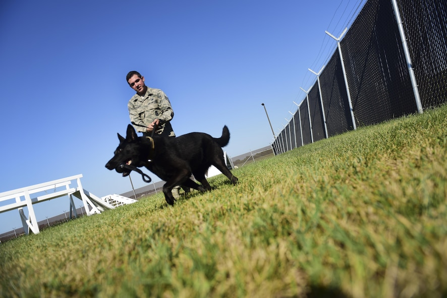U.S. Air Force Staff Sgt. Joshua Montgomery, a 509th Security Forces Squadron Military Working Dog (MWD) handler, and his side-kick MWD Gipsy recently returned from a U.S. Secret Service support mission involving the vice president. MWDs possess a superior sense of hearing, visual motion detection and a crushing jaw strength of 238 pounds of pressure, making them a special asset to the U.S. Armed Forces.