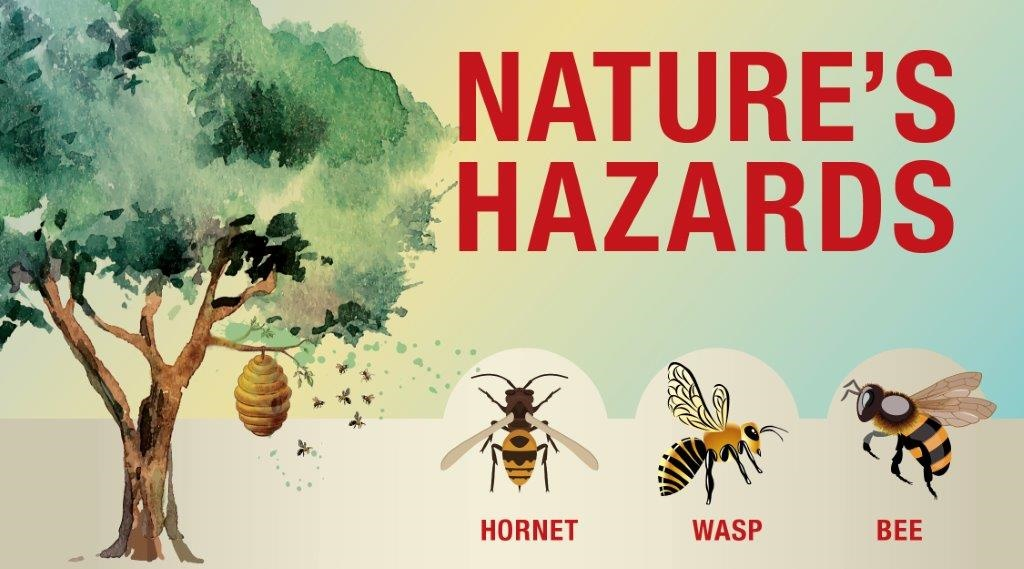nature s hazards bees wasps and hornets wright patterson afb