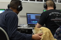 Cadence, a service dog, provides comfort to Rod Foliente, an Intermediate Photojournalism Course instructor, as he coaches students at Defense Information School on Fort Meade May 15, 2017 as students go to class. Cadence has become a welcome addition to the DINFOS family since Foliente brought Cadence to DINFOS on April 4, 2017.