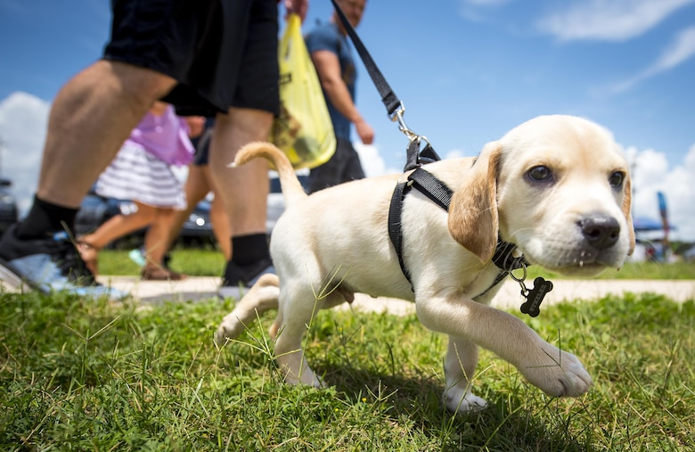 A puppy sniffs out the festivities happening at the Eglin Connects event at Eglin Air Force Base, Fla., June 2.  The event to help promote resiliency featured information booths, sporting events and a car show.  (U.S. Air Force photo/Samuel King Jr.)