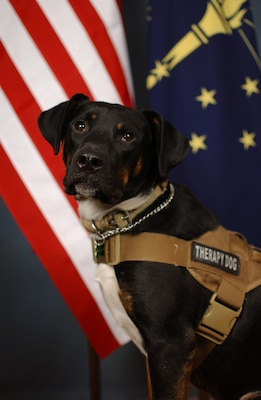 Bear, the therapy pooch, on duty in Indiana > National Guard