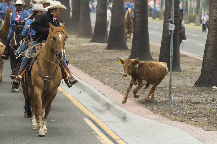 Participants herd a stray calf during a cattle drive through the Gas Lamp District in San Diego, Calif., June 3, 2017. The San Diego County Fair hosted the drive as a part of the gas lamp district's 150th anniversary and to promote the county fair that opened June 2. (U.S. Marine Corps photo by Lance Cpl. Brooke Woods)