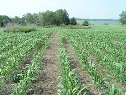 Food plots are planted for wildlife around the lake.