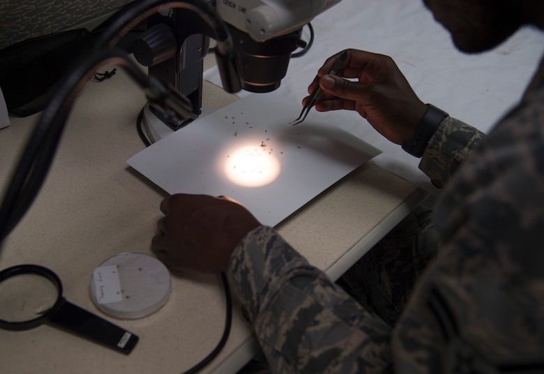 Airman 1st Class Kofi Adansi, 779th Medical Group public health technician, separates male and female mosquitoes at Joint Base Andrews, Md., June 8, 2017. The mosquitoes are then sent off to a lab where they are tested for diseases native to the area. (U.S. Air Force photo by Senior Airman Mariah Haddenham)