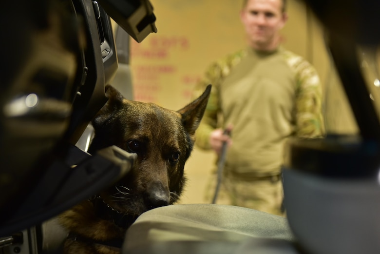 Egon, 407th Expeditionary Security Forces Squadron military working dog, searches a vehicle May 23, 2017, at the 407th Air Expeditionary Group in Southwest Asia. Egon's handler is Senior Airman Carlton Isaacson, they have been partners for approximately a year and a half. (U.S. Air Force photo by Senior Airman Ramon A. Adelan)