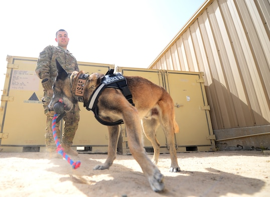 U.S. Air Force Senior Airman Omar Araujo, a military working dog handler and his partner Syrius a military working dog assigned to the 407th Expeditionary Security Forces Squadron play fetch during some down time on May 23, 2017, in Southwest Asia. Araujo and Syrius have been partners for about a year now and are deployed in support of Operation Inherent Resolve. Military working dogs are the first line of defense when it comes to explosive detection and provide security sweeps throughout the installation. (U.S. Air Force photo by Tech. Sgt. Andy M. Kin)