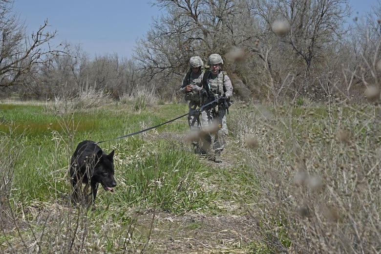Staff Sgt. Jacob Diers and Senior Airman Ivan Mendez, 92nd Security Forces Squadron Military Working Dog handlers, sweep a roadway with MWD Rosso during a ruck march May 10, 2017, at Fairchild Air Force Base, Washington. When training, the unit conducts detection sweeps of roadways and villages, ruck marches with simulated explosives and gunfire and challenging physical training in order to prevent injury. (U.S. Air Force photo/Senior Airman Mackenzie Richardson)