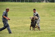 Master Sgt. Nicholas Shatek, 132d Security Forces, takes a bite from a Des Moines Police Department K-9 as a trainer oversees on June 29, 2017, at the Des Moines Airbase, Iowa. The dogs performed a vareity of manuevers which emphasized discipline and strict adherence to the trainers' commands. (U.S. Air National Guard photo by Staff Sgt. Michael J. Kelly)