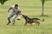 Senior Master Sgt. Robert Shepherd, 132d Wing public affairs superintendent, braces himself as a Des Moines Police Department K-9 rushes in for a bite June 29, 2017, at the Des Moines Airbase, Iowa. DMPD worked with 132d Wing members to train the K-9s to obey commands in a vareity of locations. (U.S. Air National Guard photo by Staff Sgt. Michael J. Kelly)