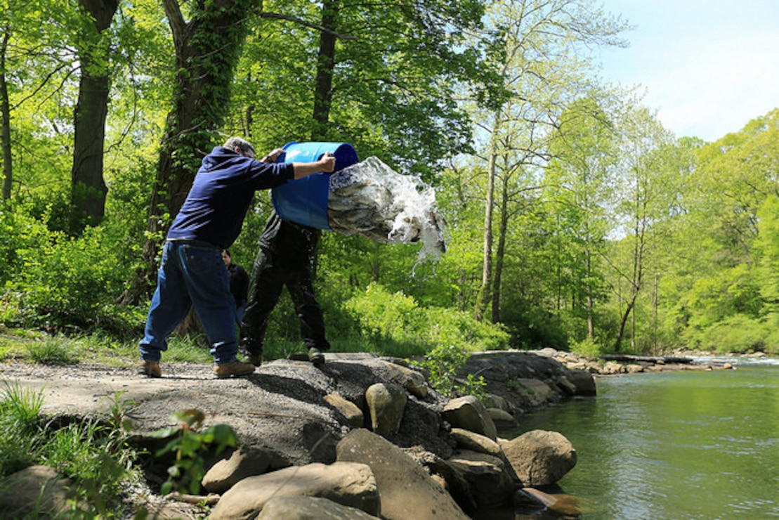 DNR staff stock trout into the North Branch of the Potomac River, May 10, 2017.