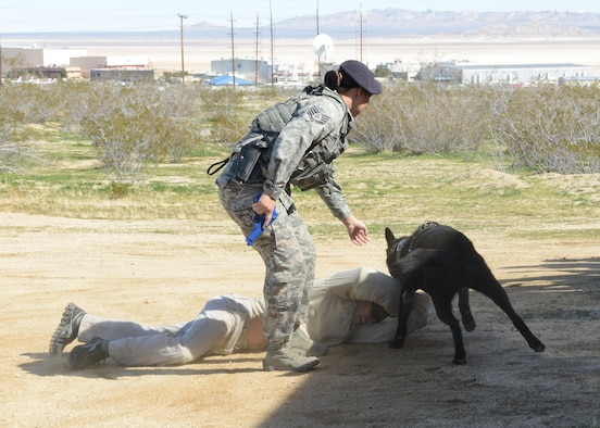 "Airmen from the 412th Security Forces Squadron put on a military working dog demonstration for guests of the new Netflix show ""Ultimate Beastmaster"" Feb. 24. (U.S. Air Force photo by Kenji Thuloweit)"