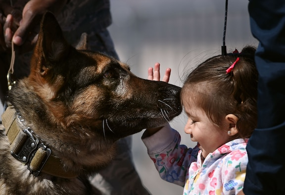 A military working dog interacts with a Creech family member during 'Family Day' at Creech Air Force Base, Nev., March 1, 2017. A MWD demonstration was one of several events that took place at Creech Family day. (U.S. Air Force photo/Airman 1st Class James Thompson)
