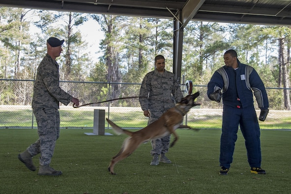 Malcolm Mitchell, right, New England Patriots' wide receiver and Super Bowl LI Champion, is attacked by Military Working Dog Ttoby during a visit March 7, 2017, at Moody Air Force Base, Ga. Mitchell, a Valdosta native, got a glimpse of a typical day in the life of Moody Airmen. Mitchell also spent time with Airmen and signed autographs for local Patriots' fans during his visit. (U.S. Air Force photo by Senior Airman Ceaira Young)