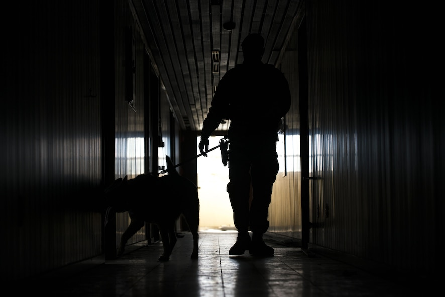 U.S. Air Force Staff. Sgt. Miguel Rodriguez, 39th Security Forces Squadron military working dog (MWD) handler, and Rambo, search a building for simulated substances during detection training, Mar. 2, 2017, at Incirlik Air Base, Turkey. Different MWD's are trained to scout and detect various substances the enemy may employ. (U.S. Air Force photo by Senior Airman John Nieves Camacho)