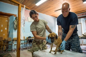 TRUJILLO, Honduras (Feb. 24, 2017) – Army Sgt. Katia Rivera, a native of Puerto Rico, assigned to Public Health Activity-Fort Belvoir, Va., and Culinary Specialist 2nd Class Nathan Rock, attached to Naval Station Everett, Wash., inspect a dog for fleas during a veterinary check-up in support of Continuing Promise 2017's (CP-17) visit to Trujillo, Honduras. CP-17 is a U.S. Southern Command-sponsored and U.S. Naval Forces Southern Command/U.S. 4th Fleet-conducted deployment to conduct civil-military operations including humanitarian assistance, training engagements, and medical, dental, and veterinary support in an effort to show U.S. support and commitment to Central and South America. (U.S. Navy photo by Mass Communication Specialist 2nd Class Shamira Purifoy)