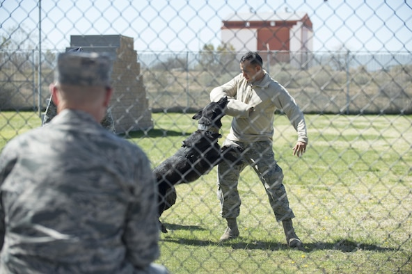 Staff Sgt. Erick Hernandez, 412th Security Forces Squadron, is apprehended by Rolf, a military working dog, during a demonstration for congressional staffers at the 412th SFS Working Dog Section March 13. (U.S. Air Force photo by Kyle Larson)