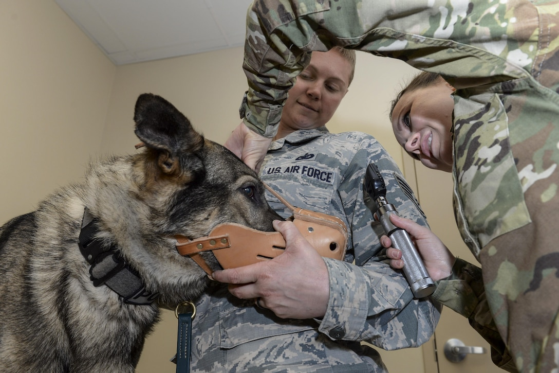 Army Capt. (Dr.) Cassandra Kerwin checks the visual acuity of Morgan, a military working dog, while her handler, Air Force Staff Sgt. Heather Albright, assists at the veterinary facility at Wright-Patterson Air Force Base, Ohio, March 16, 2017. Kerwin is officer in charge of the base's facility and Albright is a patrolman assigned to the 88th Security Forces Squadron. Air Force photo by Michelle Gigante