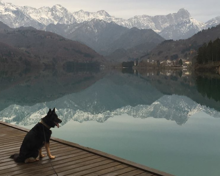Military Working Dog Luc, 100th Security Forces Squadron, takes time out after working a mission in Croatia to enjoy the view of mountains near Aviano Air Base, Italy, in November 2015. His then-handler, Tech. Sgt. Roy Carter, 100th SFS MWD kennelmaster, explained that since the team drove to Aviano from Croatia, he wanted to let Luc have time to enjoy just being a dog for the day, and they spent time walking around the mountains, just being free and having no commands for the short time they were there. (Courtesy photo by Tech. Sgt. Roy Carter)