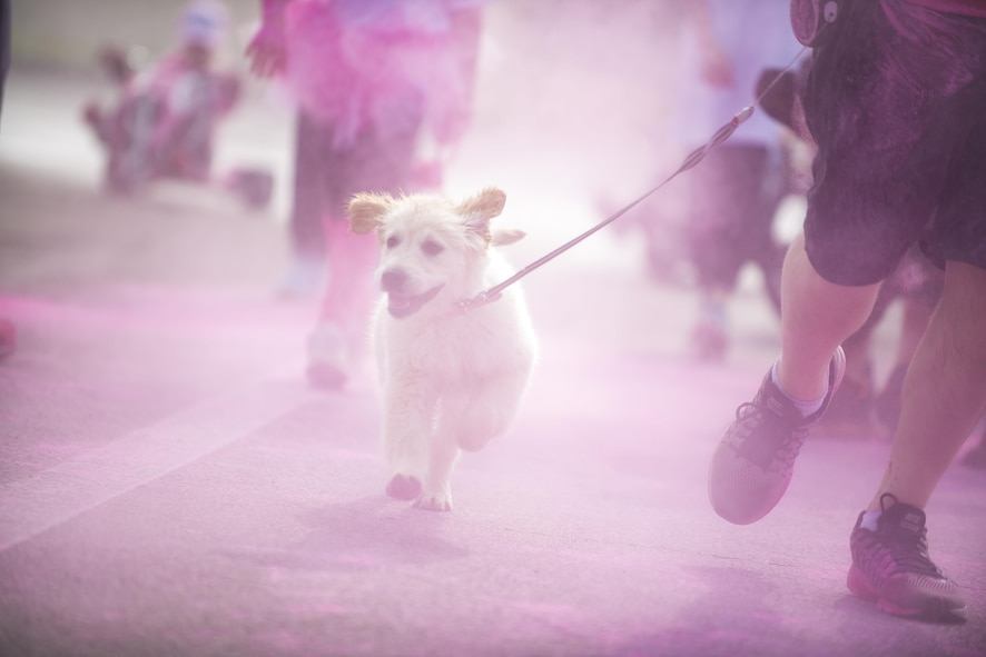 A dog runs through pink powder during the 11th Annual Breast Cancer Awareness Walk at Aviano Air Base, Italy, March 18, 2017. More than 500 participants helped raise over $12,000 for the Centro di Riferimento Oncologico, a local oncology referral center, and The Rose, a non-profit mobile mammography bus that offers exams and treatments to underprivileged women in the Houston area.  (U.S. Air Force photo by Senior Airman Cory W. Bush)